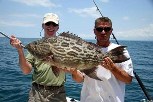 Grouper in Costa Rica