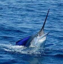 Kinembe Sportfishing1