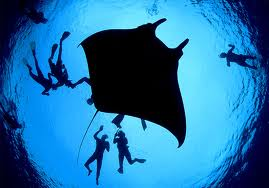 Scuba Diving in Bat Islands1