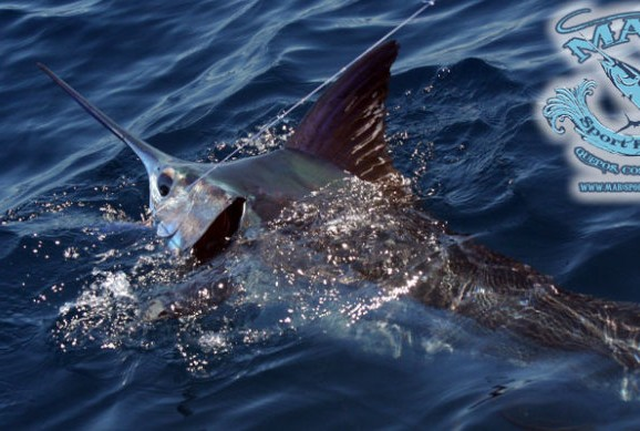 Sportfishing costa rica fishing quepos jaco boats for Costa rica fishing charters