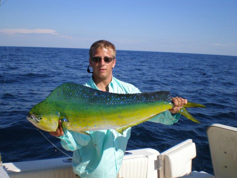 The Dolphin Fish – Mahi Mahi